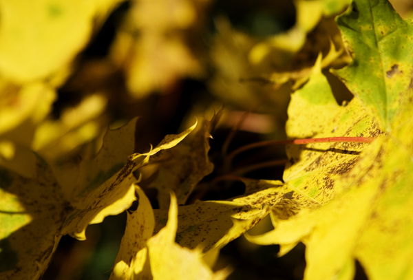 IMG_8775_Herbst